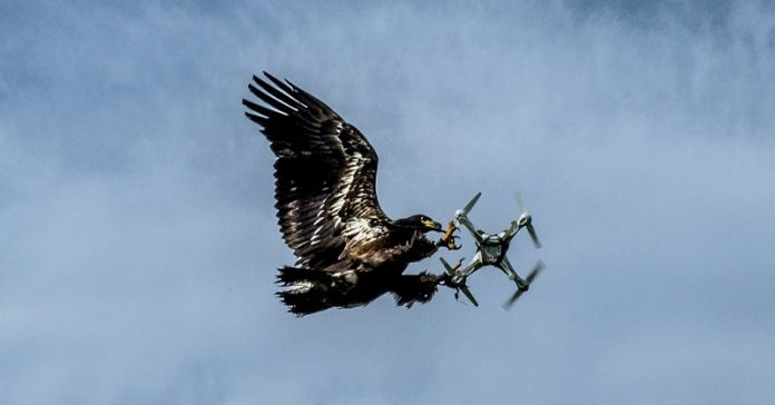 eagle catch drone
