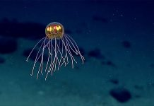 Live stream ekspedicije sa dna okeana