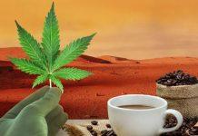 konoplja i kafa se salju u svemir